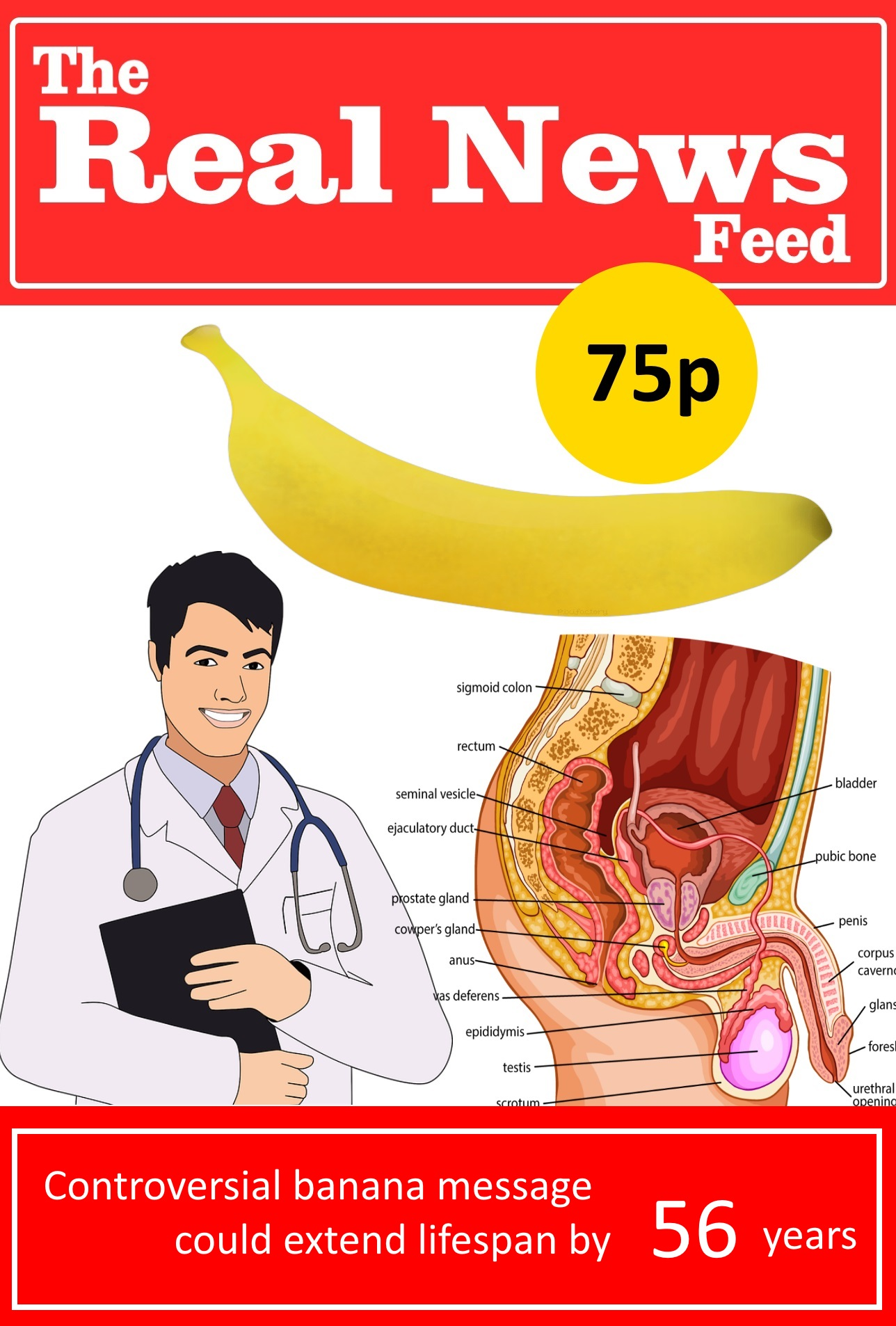 Scientists declare that massaging the prostate with a banana can extend  lifespan by decades.
