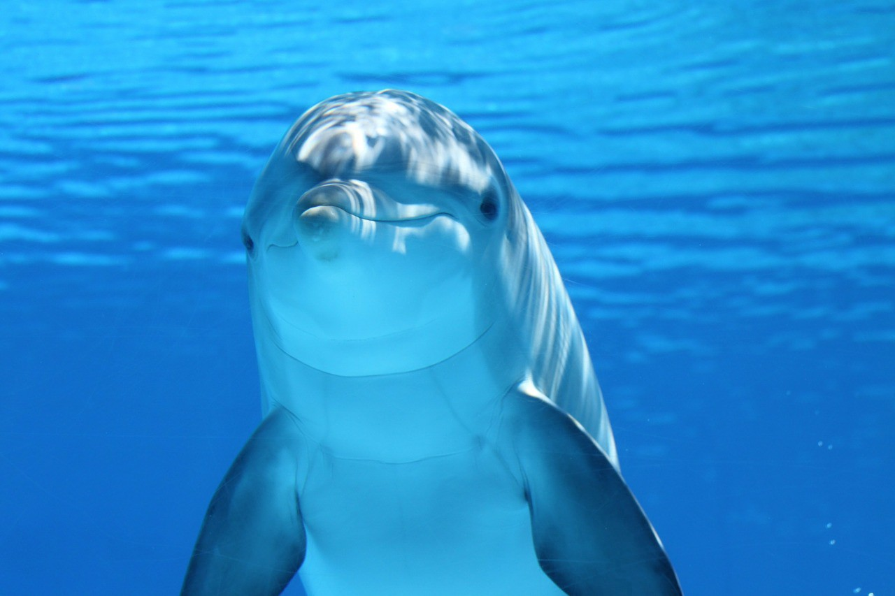 Dolphin Language Could Be Translated Using Artificial Intelligence — Steemit