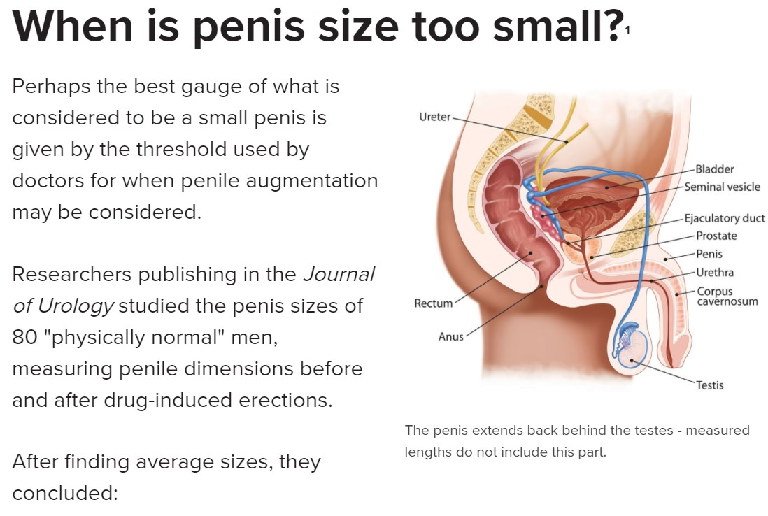 What is the regular penis size
