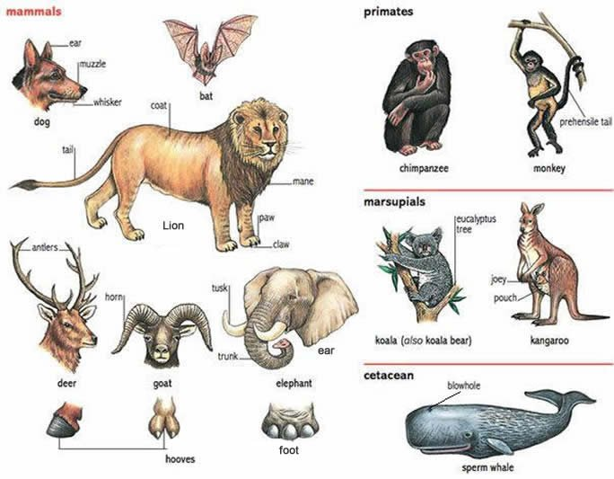 Animals And Their Various Yoruba Names