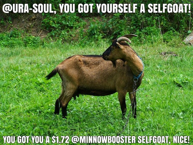 @ura-soul got you a $1.72 @minnowbooster upgoat, nice!