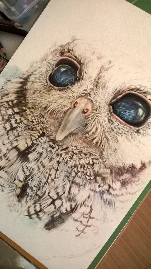 A Timelapse Video Drawing Zeus The Blind Owl With Colored Pencils