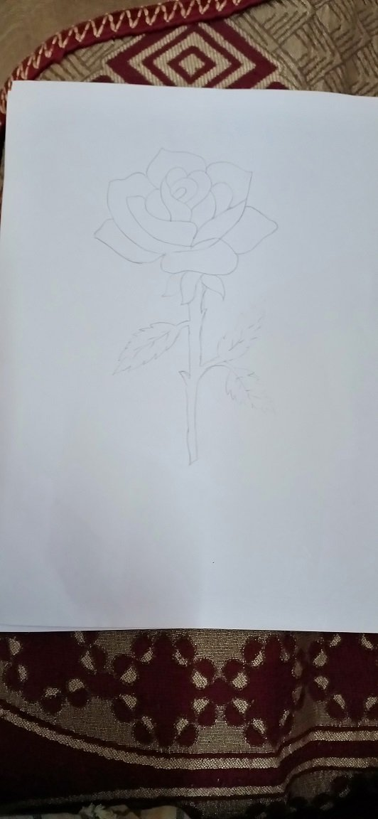 Rose Drawing.jpg