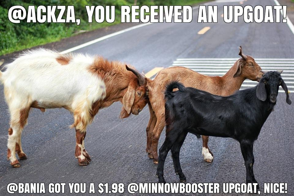 @bania got you a $1.98 @minnowbooster upgoat, nice!